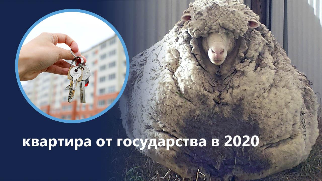 С паршивой овцы хоть шерсти клок: квартира от государства в 2020